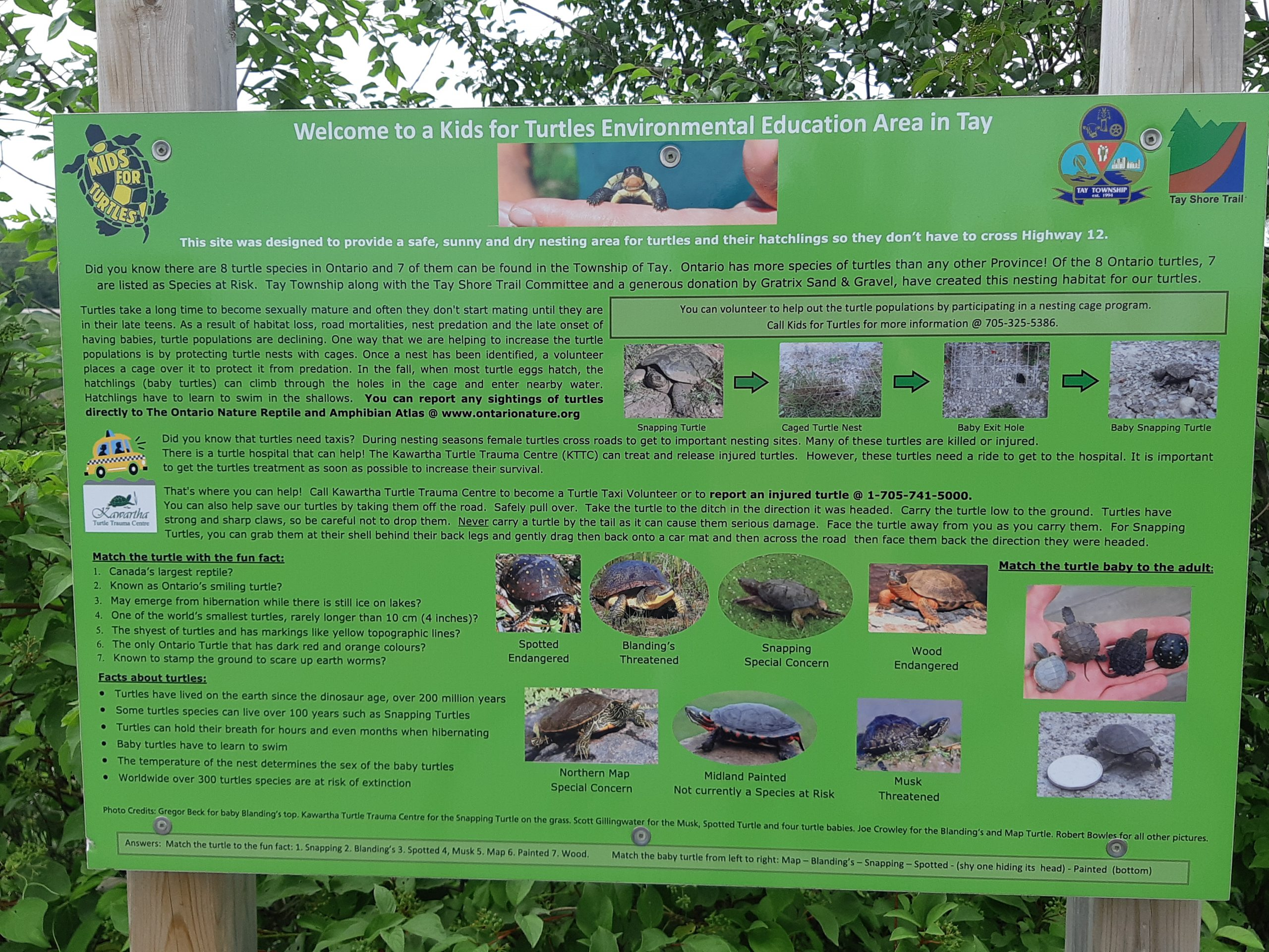 Turtle information on the Tay Trail