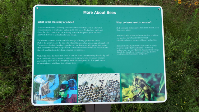 The Life Story of a Bee