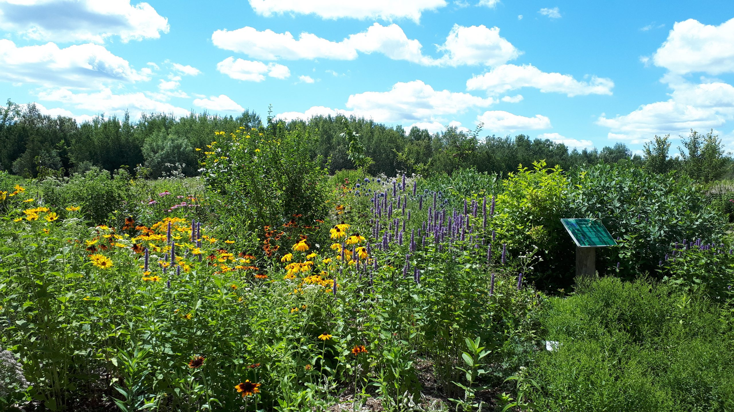 Pollinator Gardens near Orangeville