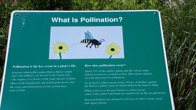 What is Pollination Sign
