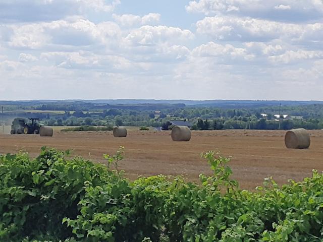 Harvesting the Hay Simcoe County
