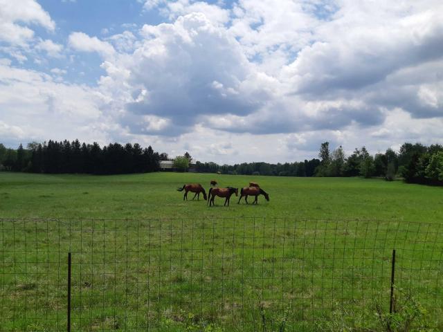 Horses in Pasture  New Tecumseth