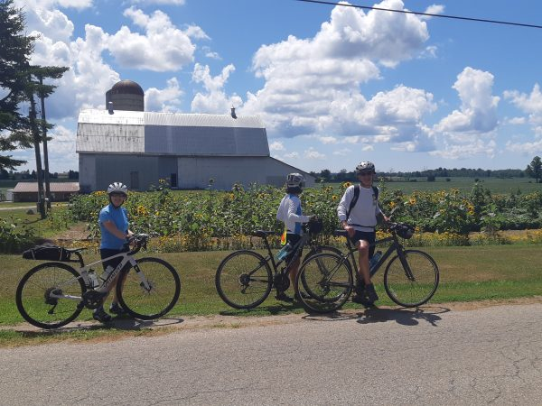 Three Cyclists in front of Sunflower Field